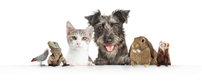 Pets Trusts, Estate Planning for dogs, cats, and other pets in Massachusetts